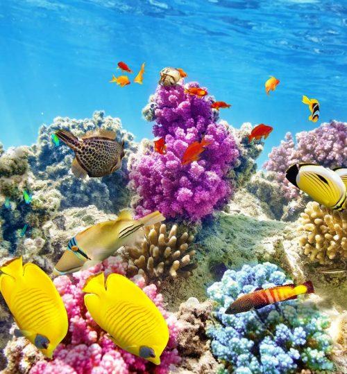 Fish_many